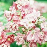 Blütenfestival Hückeswagen / Location: Pflanzenpark Scheideweg