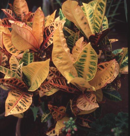 Pflanzenwelt auf Fuerteventura