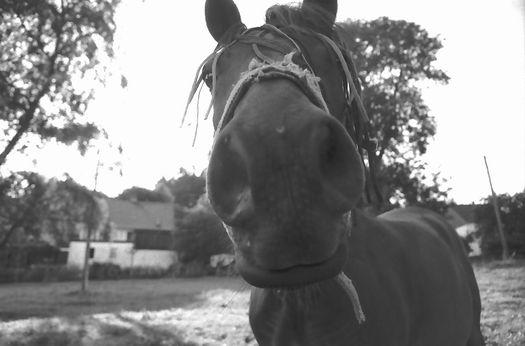 Pferd Dürhagen