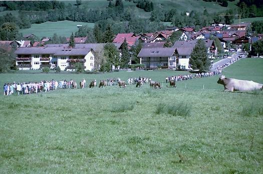 Besucher Viehscheid Hindelang