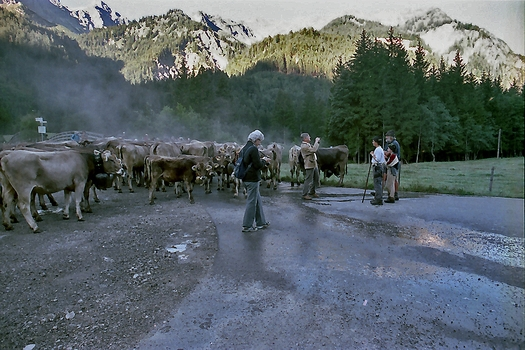 Viehscheid in Hindelang