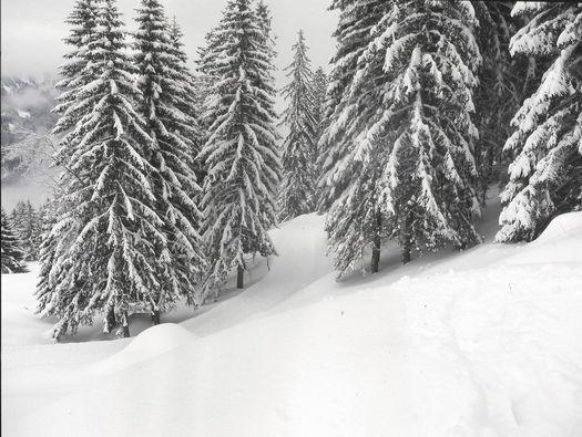 winterlandschaft allgäu